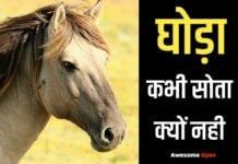 घोड़ा कभी सोता क्यों नही जानिए हिंदी में।